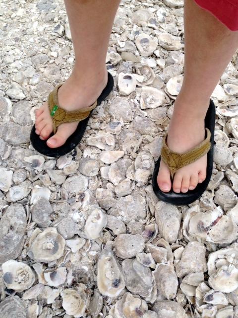 feet_shells
