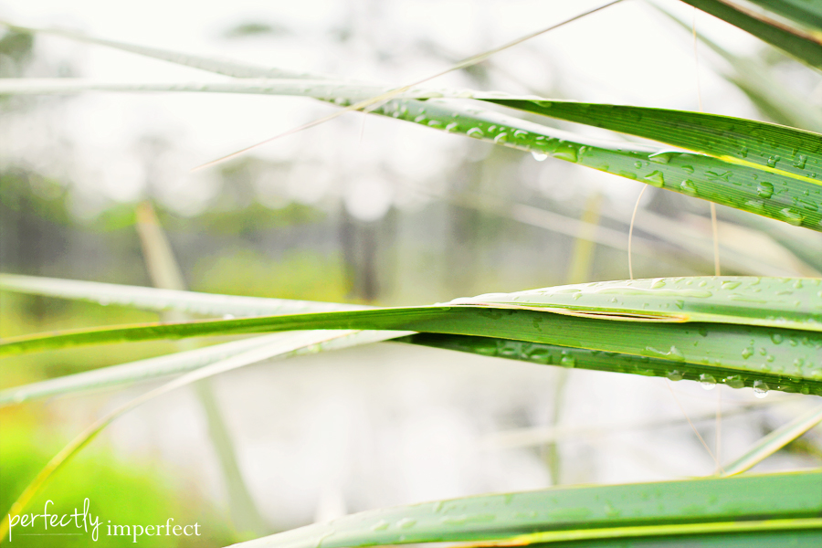 leaves_raindrops